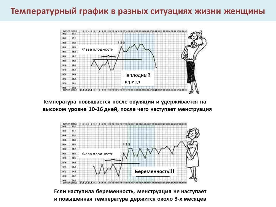 Максимальная температура у беременных на ранних сроках 66