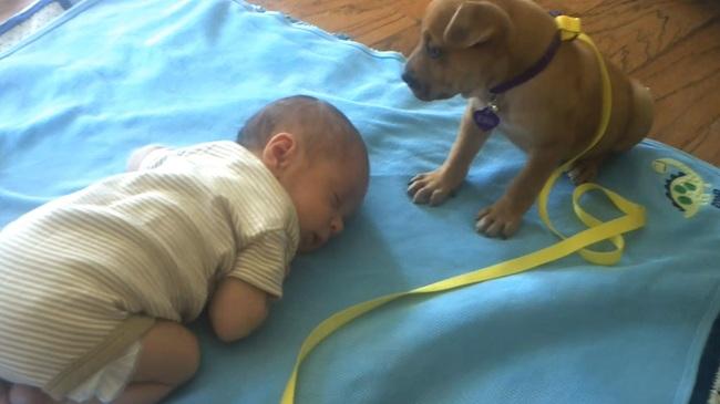 Ребенок упал с кровати Комаровский