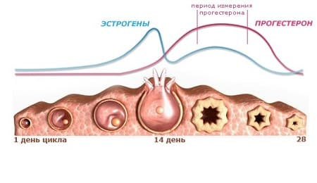 Прогестерон при беременности. Норма по неделям, таблица