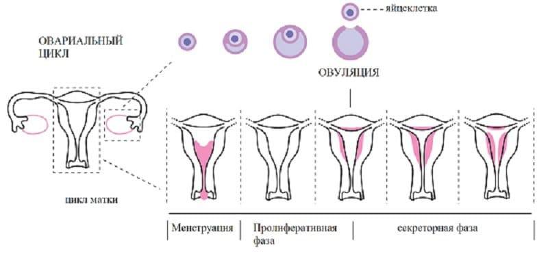 Можно ли о беременности узнать после месячных