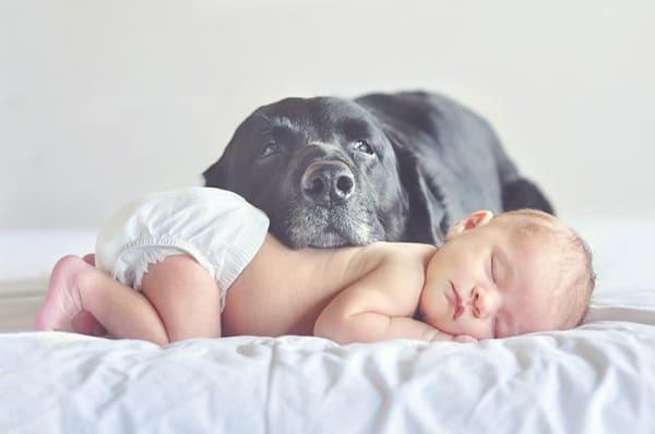 Какое животное завести в квартире для ребенка