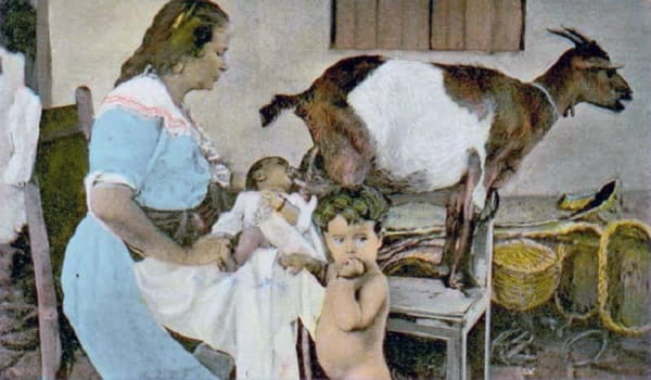 Можно ли козье молоко при грудном вскармливании