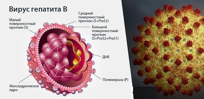 Прививка гепатит в новорожденным схема 34
